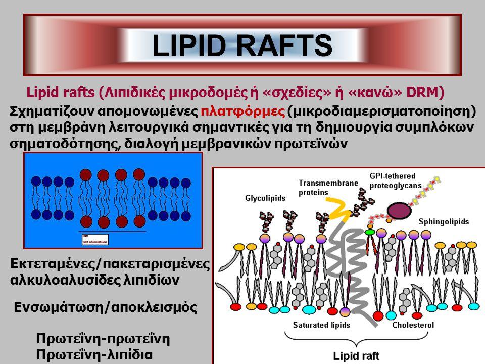 LIPID RAFTS Σχηματίζουν απομονωμένες πλατφόρμες (μικροδιαμερισματοποίηση) στη μεμβράνη λειτουργικά σημαντικές για τη δημιουργία συμπλόκων σηματοδότησης, διαλογή μεμβρανικών πρωτεϊνών Lipid rafts (Λιπιδικές μικροδομές ή «σχεδίες» ή «κανώ» DRM) Εκτεταμένες/πακεταρισμένες αλκυλοαλυσίδες λιπιδίων Ενσωμάτωση/αποκλεισμός Πρωτεΐνη-πρωτεΐνη Πρωτεΐνη-λιπίδια