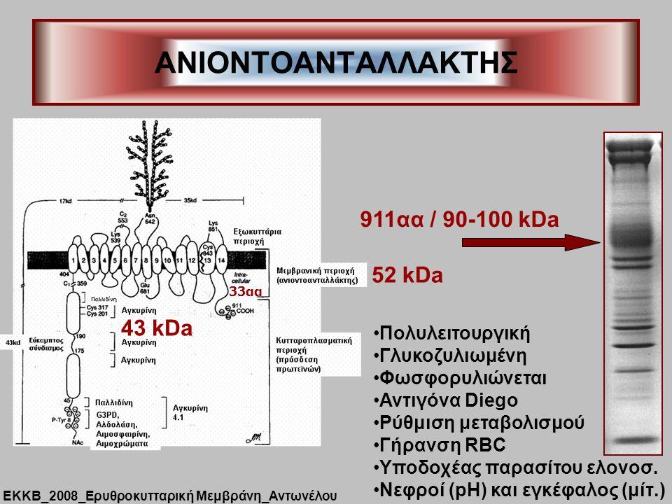 ANIONTOΑΝΤΑΛΛΑΚΤΗΣ Πολυλειτουργική Γλυκοζυλιωμένη Φωσφορυλιώνεται Αντιγόνα Diego Ρύθμιση μεταβολισμού Γήρανση RBC Υποδοχέας παρασίτου ελονοσ. Νεφροί (
