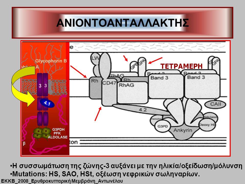 ANIONTOΑΝΤΑΛΛΑΚΤΗΣ H συσσωμάτωση της ζώνης-3 αυξάνει με την ηλικία/οξείδωση/μόλυνση Mutations: HS, SAO, HSt, oξέωση νεφρικών σωληναρίων.