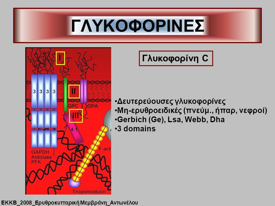 ΓΛΥΚΟΦΟΡΙΝΕΣ Γλυκοφορίνη C Δευτερεύουσες γλυκοφορίνες Μη-ερυθροειδικές (πνεύμ., ήπαρ, νεφροί) Gerbich (Ge), Lsa, Webb, Dha 3 domains I II III ΕΚΚΒ_2008_Ερυθροκυτταρική Μεμβράνη_Αντωνέλου