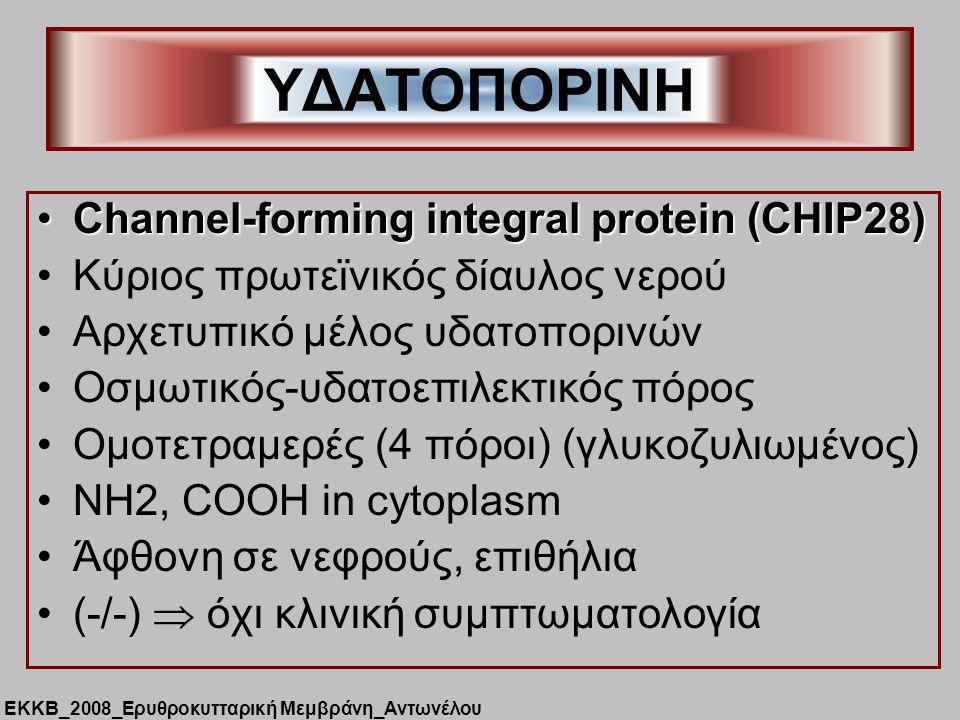 Channel-forming integral protein (CHIP28)Channel-forming integral protein (CHIP28) Κύριος πρωτεϊνικός δίαυλος νερού Αρχετυπικό μέλος υδατοπορινών Οσμωτικός-υδατοεπιλεκτικός πόρος Ομοτετραμερές (4 πόροι) (γλυκοζυλιωμένος) NH2, COOH in cytoplasm Άφθονη σε νεφρούς, επιθήλια (-/-)  όχι κλινική συμπτωματολογία ΥΔΑΤΟΠΟΡΙΝΗ ΕΚΚΒ_2008_Ερυθροκυτταρική Μεμβράνη_Αντωνέλου