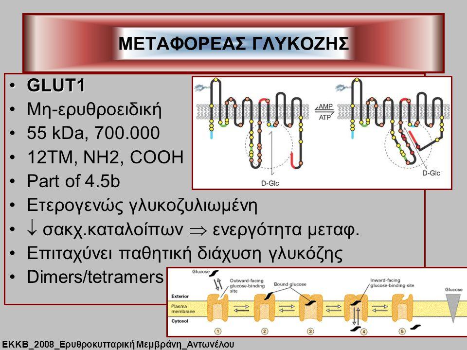 GLUT1GLUT1 Μη-ερυθροειδική 55 kDa, 700.000 12TM, NH2, COOH Part of 4.5b Ετερογενώς γλυκοζυλιωμένη  σακχ.καταλοίπων  ενεργότητα μεταφ.