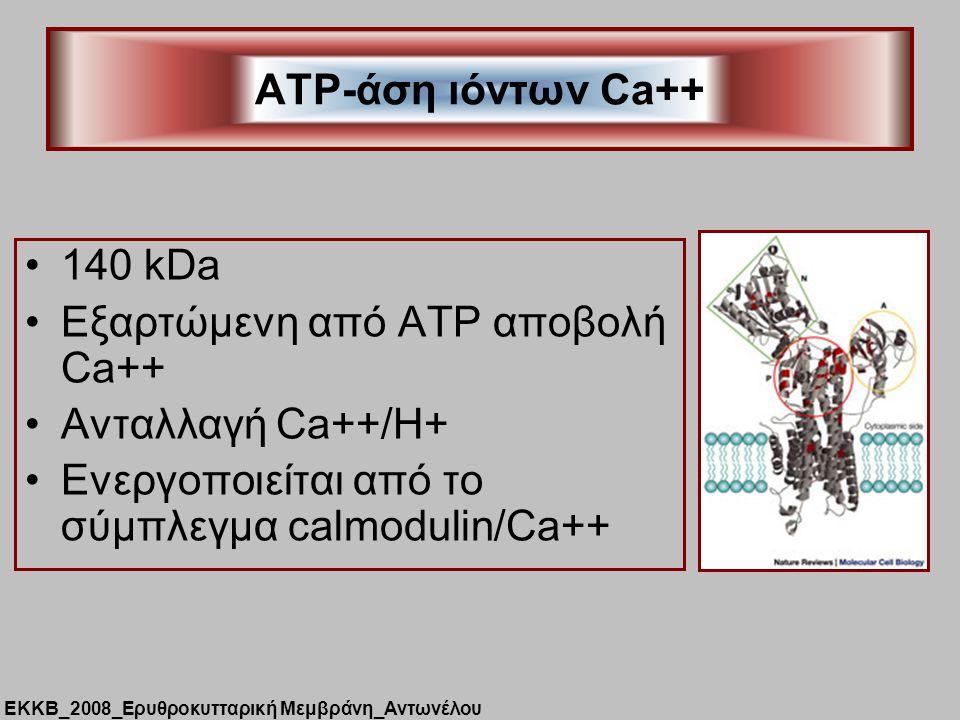 140 kDa Εξαρτώμενη από ATP αποβολή Ca++ Ανταλλαγή Ca++/H+ Ενεργοποιείται από το σύμπλεγμα calmodulin/Ca++ ATP-άση ιόντων Ca++ ΕΚΚΒ_2008_Ερυθροκυτταρική Μεμβράνη_Αντωνέλου