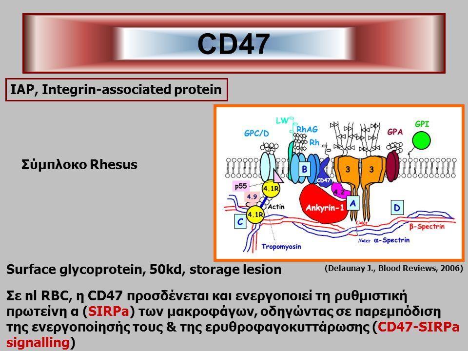 ΙΑΡ, Integrin-associated protein Surface glycoprotein, 50kd, storage lesion Σε nl RBC, η CD47 προσδένεται και ενεργοποιεί τη ρυθμιστική πρωτείνη α (SIRPa) των μακροφάγων, οδηγώντας σε παρεμπόδιση της ενεργοποίησής τους & της ερυθροφαγοκυττάρωσης (CD47-SIRPa signalling) CD47 (Delaunay J., Blood Reviews, 2006) Σύμπλοκο Rhesus