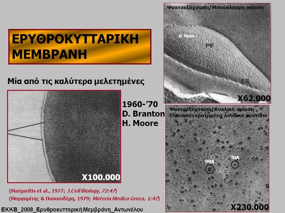 ΕΡΥΘΡΟΚΥΤΤΑΡΙΚΗ ΜΕΜΒΡΑΝΗ X100.000 Μία από τις καλύτερα μελετημένες ΕΚΚΒ_2008_Ερυθροκυτταρική Μεμβράνη_Αντωνέλου (Μαργαρίτης & Παπασιδέρη, 1979; Materia Medica Greca, 1:47) (Margaritis et al., 1977; J.Cell Biology, 72:47) X62.000 6-9nm Ψυκτοεξάχνωση/Μονόπλευρη σκίαση Ψυκτοεξάχνωση/Κυκλική σκίαση Επανασυγκροτημένα λιπιδικά κυστίδια 30Α 90Α X230.000 1960-'70 D.