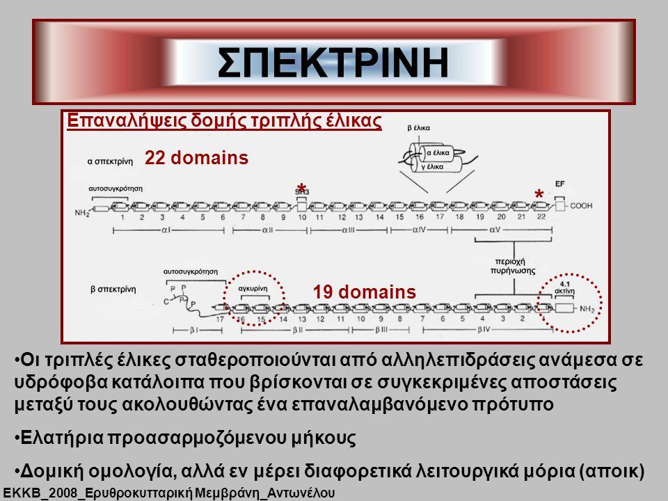 ΣΠΕΚΤΡΙΝΗ 22 domains * * Επαναλήψεις δομής τριπλής έλικας 19 domains Οι τριπλές έλικες σταθεροποιούνται από αλληλεπιδράσεις ανάμεσα σε υδρόφοβα κατάλοιπα που βρίσκονται σε συγκεκριμένες αποστάσεις μεταξύ τους ακολουθώντας ένα επαναλαμβανόμενο πρότυπο Ελατήρια προασαρμοζόμενου μήκους Δομική ομολογία, αλλά εν μέρει διαφορετικά λειτουργικά μόρια (αποικ) ΕΚΚΒ_2008_Ερυθροκυτταρική Μεμβράνη_Αντωνέλου