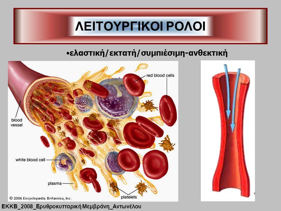 ΛΕΙΤΟΥΡΓΙΚΟΙ ΡΟΛΟΙ ΕΚΚΒ_2008_Ερυθροκυτταρική Μεμβράνη_Αντωνέλου ελαστική/εκτατή/συμπιέσιμη-ανθεκτική