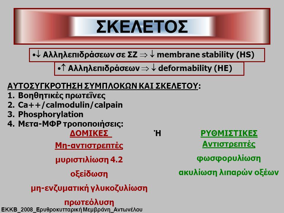 ΣΚΕΛΕΤΟΣ  Αλληλεπιδράσεων   deformability (HE)  Αλληλεπιδράσεων σε ΣΖ   membrane stability (HS) AYTOΣΥΓΚΡΟΤΗΣΗ ΣΥΜΠΛΟΚΩΝ ΚΑΙ ΣΚΕΛΕΤΟΥ AYTOΣΥΓΚΡΟΤΗΣΗ ΣΥΜΠΛΟΚΩΝ ΚΑΙ ΣΚΕΛΕΤΟΥ: 1.Βοηθητικές πρωτεΐνες 2.Ca++/calmodulin/calpain 3.Phosphorylation 4.Μετα-ΜΦΡ τροποποιήσεις: ΔΟΜΙΚΕΣ Ή ΡΥΘΜΙΣΤΙΚΕΣ Μη-αντιστρεπτές μυριστιλίωση 4.2 οξείδωση μη-ενζυματική γλυκοζυλίωση πρωτεόλυση Αντιστρεπτές φωσφορυλίωση ακυλίωση λιπαρών οξέων ΕΚΚΒ_2008_Ερυθροκυτταρική Μεμβράνη_Αντωνέλου