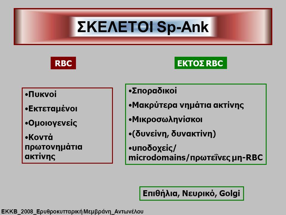 ΣΚΕΛΕΤΟΙ Sp-Ank RBC Πυκνοί Εκτεταμένοι Ομοιογενείς Κοντά πρωτονημάτια ακτίνης ΕΚΤΟΣ RBC Σποραδικοί Μακρύτερα νημάτια ακτίνης Μικροσωληνίσκοι (δυνείνη, δυνακτίνη) υποδοχείς/ microdomains/πρωτεΐνες μη-RBC Επιθήλια, Νευρικό, Golgi ΕΚΚΒ_2008_Ερυθροκυτταρική Μεμβράνη_Αντωνέλου