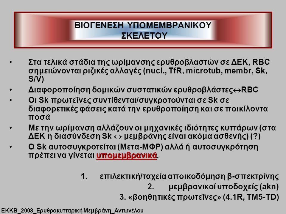 ΒΙΟΓΕΝΕΣΗ ΥΠΟΜΕΜΒΡΑΝΙΚΟΥ ΣΚΕΛΕΤΟΥ Στα τελικά στάδια της ωρίμανσης ερυθροβλαστών σε ΔΕΚ, RBC σημειώνονται ριζικές αλλαγές (nucl., TfR, microtub, membr, Sk, S/V) Διαφοροποίηση δομικών συστατικών ερυθροβλάστες  RBC Οι Sk πρωτεΐνες συντίθενται/συγκροτούνται σε Sk σε διαφορετικές φάσεις κατά την ερυθροποίηση και σε ποικίλοντα ποσά Με την ωρίμανση αλλάζουν οι μηχανικές ιδιότητες κυττάρων (στα ΔΕΚ η διασύνδεση Sk  μεμβράνης είναι ακόμα ασθενής) (?) υπομεμβρανικάΟ Sk αυτοσυγκροτείται (Μετα-ΜΦΡ) αλλά ή αυτοσυγκρότηση πρέπει να γίνεται υπομεμβρανικά.