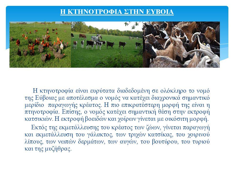 Η κτηνοτροφία είναι ευρύτατα διαδεδομένη σε ολόκληρο το νομό της Εύβοιας με αποτέλεσμα ο νομός να κατέχει διαχρονικά σημαντικό μερίδιο παραγωγής κρέατος.