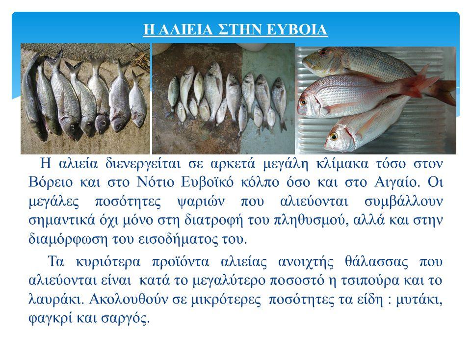 Η αλιεία διενεργείται σε αρκετά μεγάλη κλίμακα τόσο στον Βόρειο και στο Νότιο Ευβοϊκό κόλπο όσο και στο Αιγαίο.