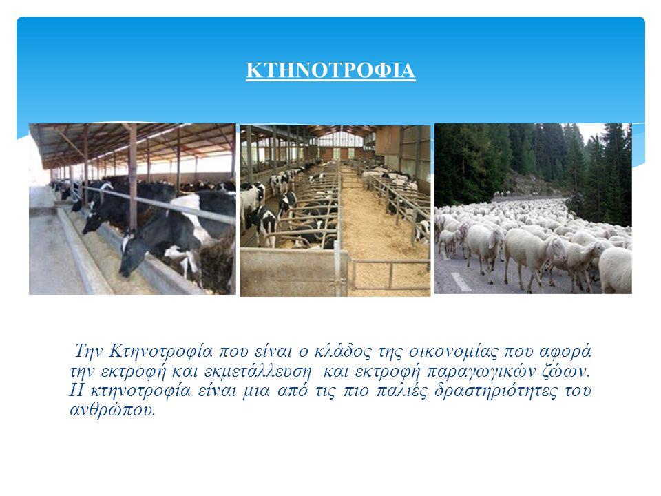 Την Κτηνοτροφία που είναι ο κλάδος της οικονομίας που αφορά την εκτροφή και εκμετάλλευση και εκτροφή παραγωγικών ζώων.