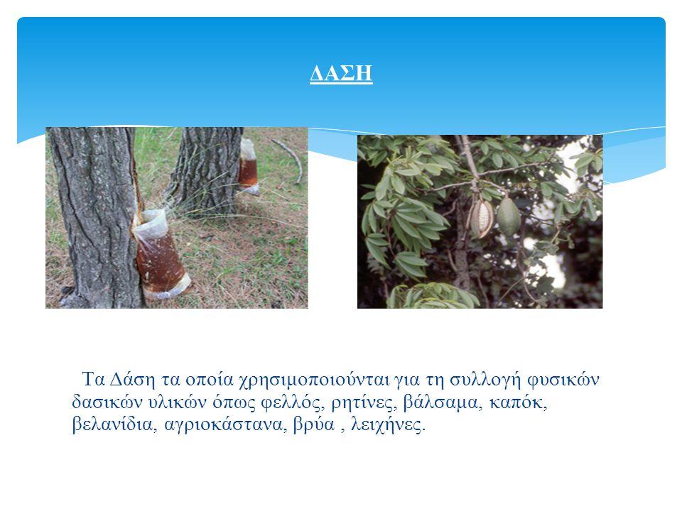 Tα Δάση τα οποία χρησιμοποιούνται για τη συλλογή φυσικών δασικών υλικών όπως φελλός, ρητίνες, βάλσαμα, καπόκ, βελανίδια, αγριοκάστανα, βρύα, λειχήνες.