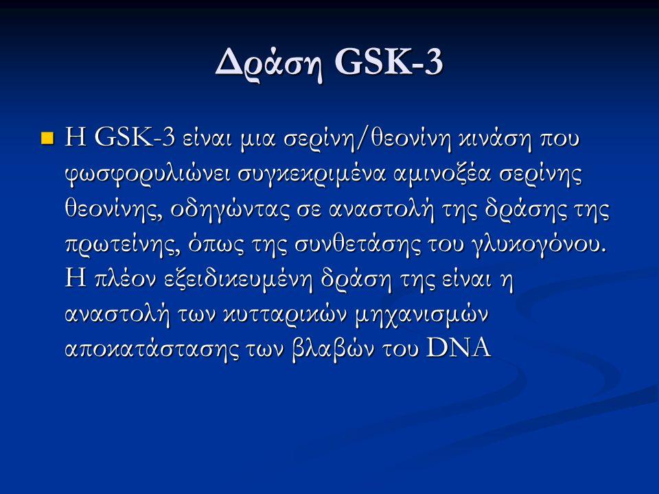 Δράση GSK-3 Η GSK-3 είναι μια σερίνη/θεονίνη κινάση που φωσφορυλιώνει συγκεκριμένα αμινοξέα σερίνης θεονίνης, οδηγώντας σε αναστολή της δράσης της πρω