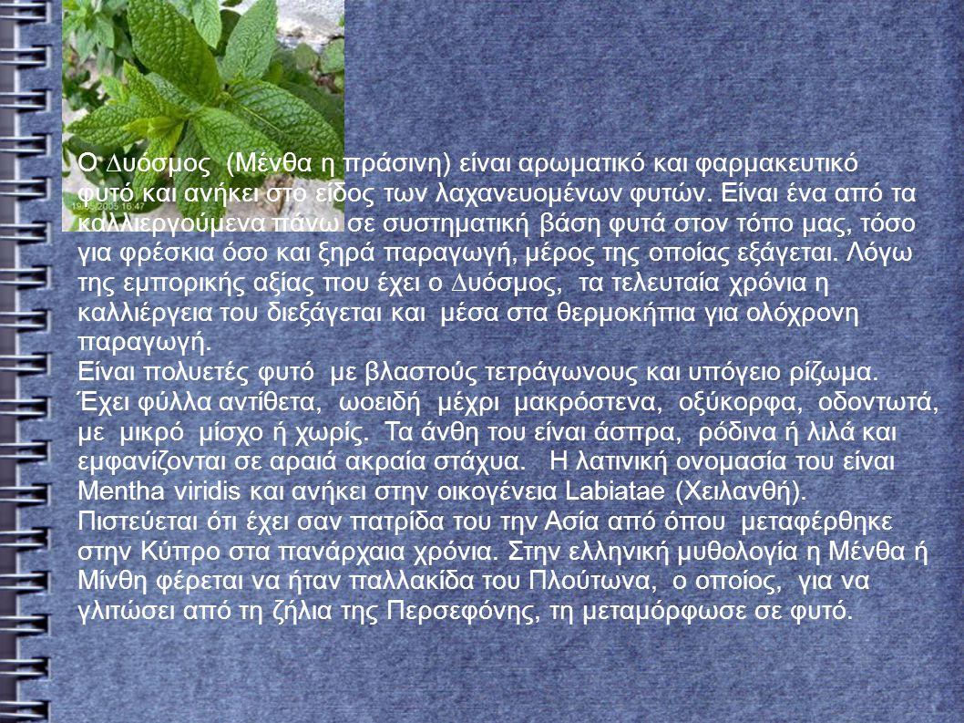 Ο ∆υόσµος (Μένθα η πράσινη) είναι αρωµατικό και φαρµακευτικό φυτό και ανήκει στο είδος των λαχανευοµένων φυτών.