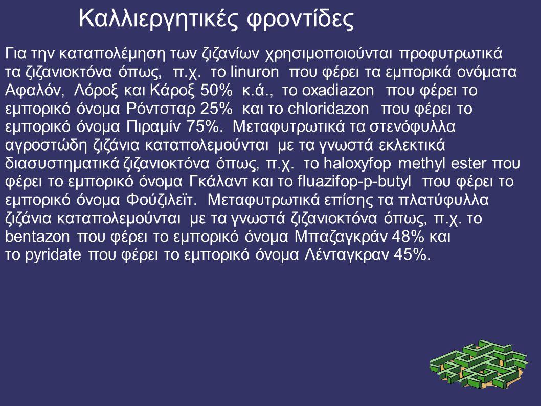 Για την καταπολέµηση των ζιζανίων χρησιµοποιούνται προφυτρωτικά τα ζιζανιοκτόνα όπως, π.χ.