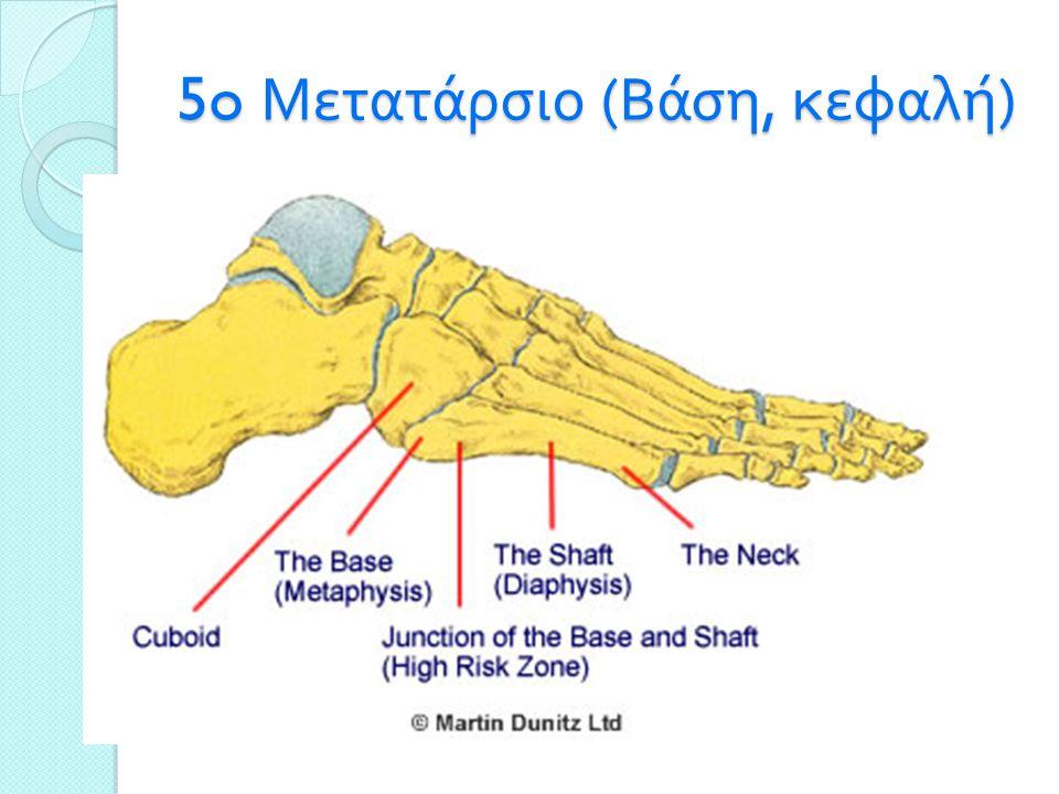 5o Μετατάρσιο ( Βάση, κεφαλή )