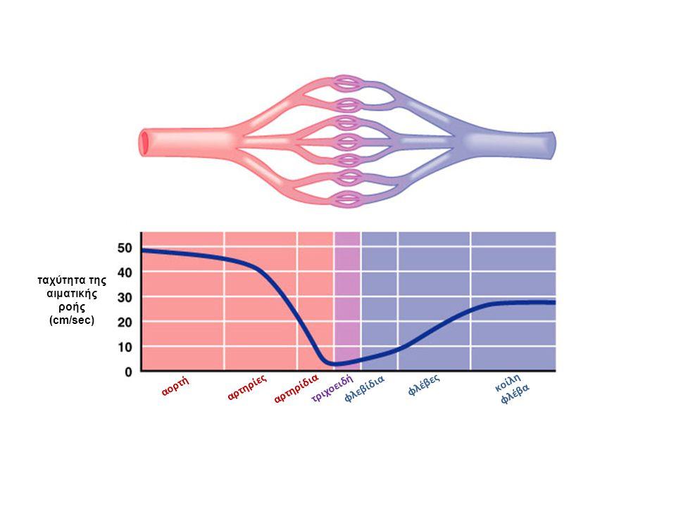 ταχύτητα της αιματικής ροής (cm/sec) αορτή αρτηρίες αρτηρίδια τριχοειδή φλεβίδια φλέβες κοίλη φλέβα