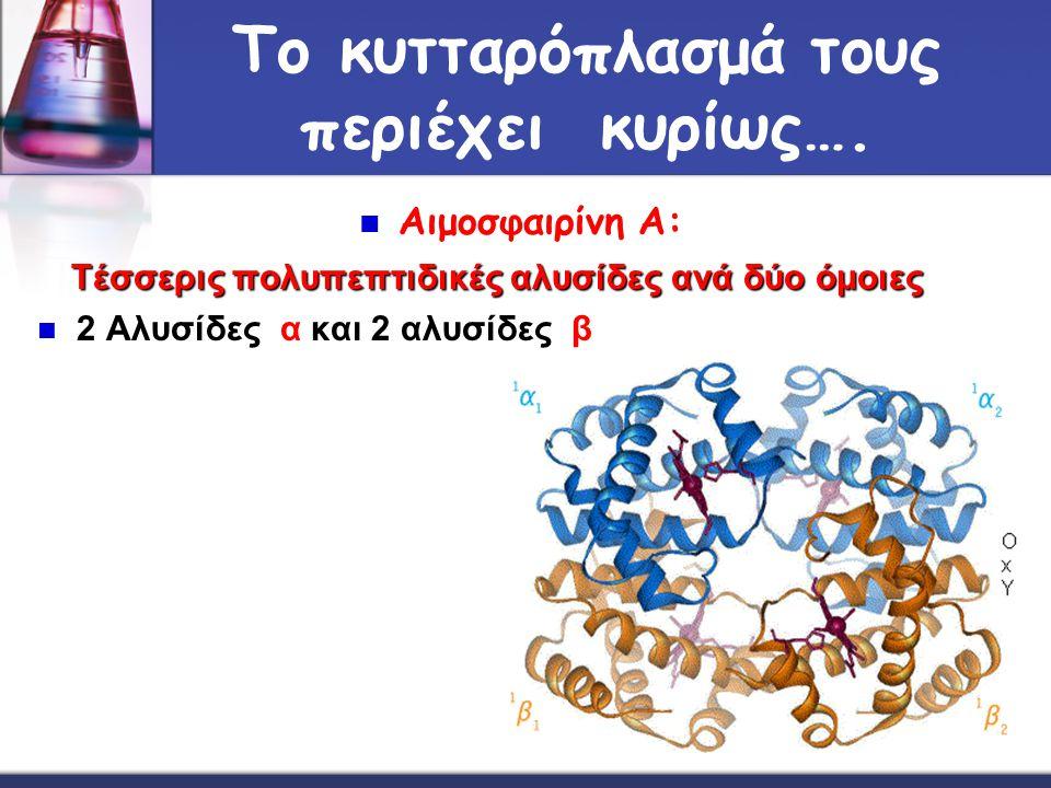 Το κυτταρόπλασμά τους περιέχει κυρίως…. Αιμοσφαιρίνη Α: Τέσσερις πολυπεπτιδικές αλυσίδες ανά δύο όμοιες 2 Αλυσίδες α και 2 αλυσίδες β