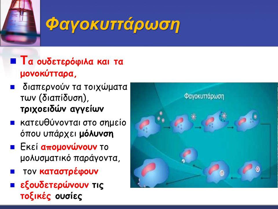 Φαγοκυττάρωση T α ουδετερόφιλα και τα μονοκύτταρα, διαπερνούν τα τοιχώματα των (διαπίδυση), τριχοειδών αγγείων κατευθύνονται στο σημείο όπου υπάρχει μ