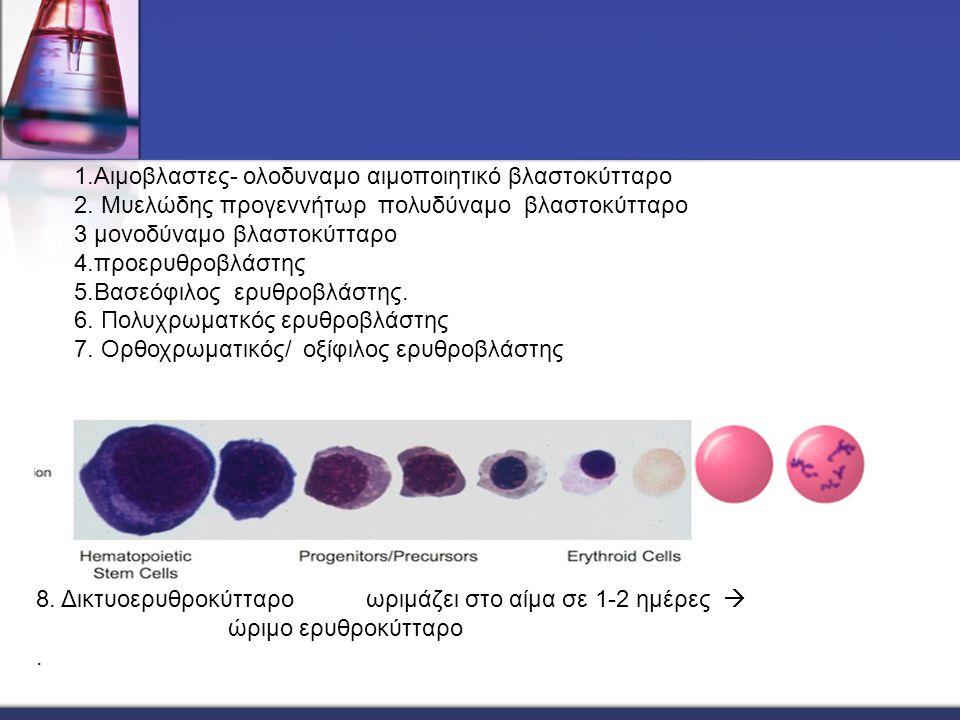 1.Αιμοβλαστες- ολοδυναμο αιμοποιητικό βλαστοκύτταρο 2. Μυελώδης προγεννήτωρ πολυδύναμο βλαστοκύτταρο 3 μονοδύναμο βλαστοκύτταρο 4.προερυθροβλάστης 5.Β