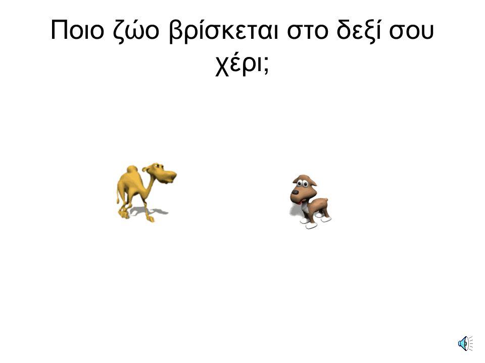 Το πουλί βρίσκεται δίπλα στο σκύλο.