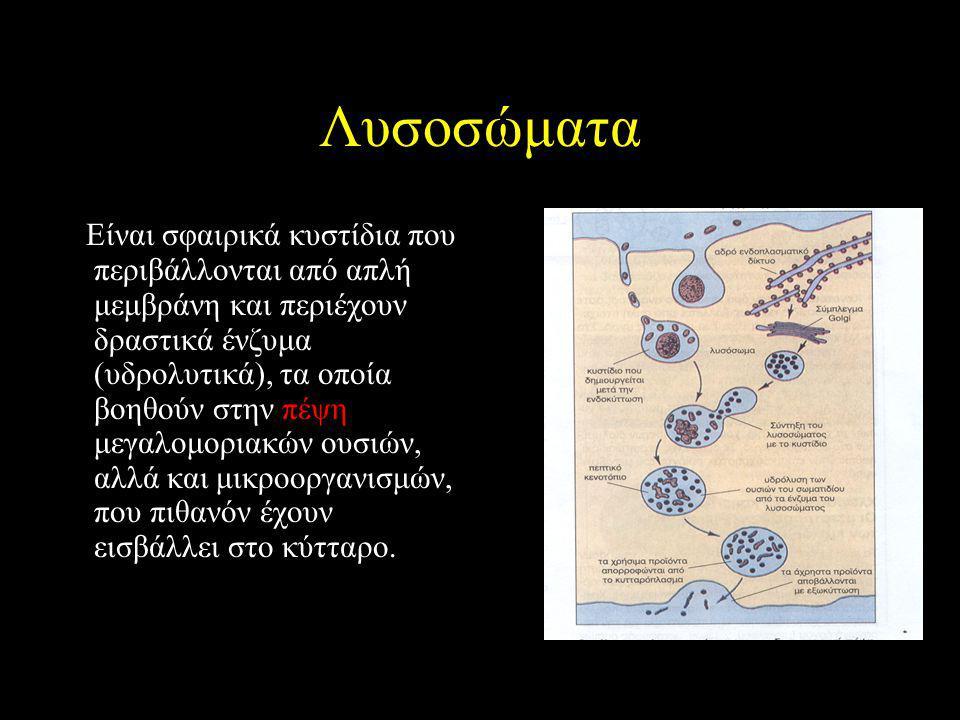 Λυσοσώματα Είναι σφαιρικά κυστίδια που περιβάλλονται από απλή μεμβράνη και περιέχουν δραστικά ένζυμα (υδρολυτικά), τα οποία βοηθούν στην πέψη μεγαλομοριακών ουσιών, αλλά και μικροοργανισμών, που πιθανόν έχουν εισβάλλει στο κύτταρο.