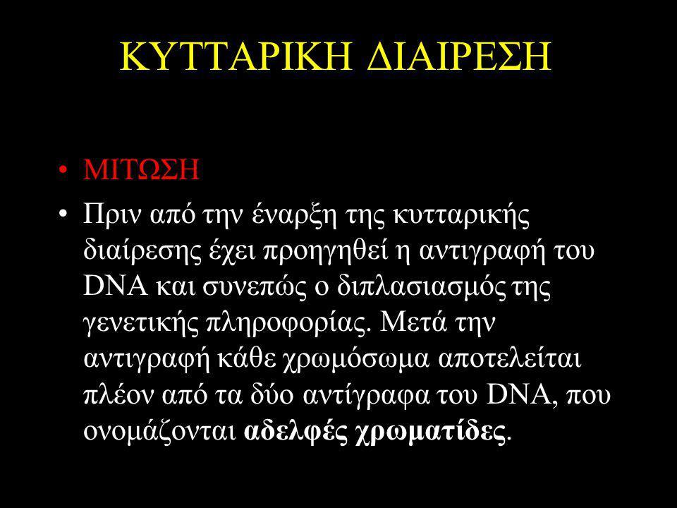 ΚΥΤΤΑΡΙΚΗ ΔΙΑΙΡΕΣΗ ΜΙΤΩΣΗ Πριν από την έναρξη της κυτταρικής διαίρεσης έχει προηγηθεί η αντιγραφή του DNA και συνεπώς ο διπλασιασμός της γενετικής πληροφορίας.