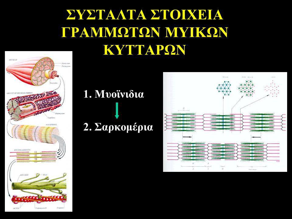 ΣΥΣΤΑΛΤΑ ΣΤΟΙΧΕΙΑ ΓΡΑΜΜΩΤΩΝ ΜΥΙΚΩΝ ΚΥΤΤΑΡΩΝ 1. Μυοϊνιδια 2. Σαρκομέρια