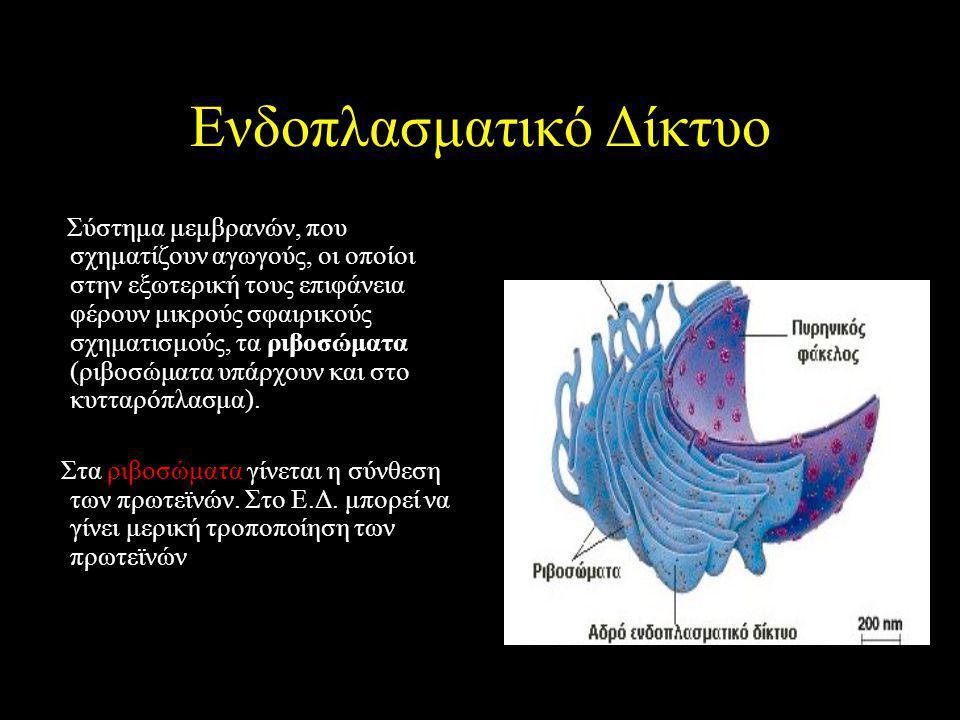 Ενδοπλασματικό Δίκτυο Σύστημα μεμβρανών, που σχηματίζουν αγωγούς, οι οποίοι στην εξωτερική τους επιφάνεια φέρουν μικρούς σφαιρικούς σχηματισμούς, τα ριβοσώματα (ριβοσώματα υπάρχουν και στο κυτταρόπλασμα).