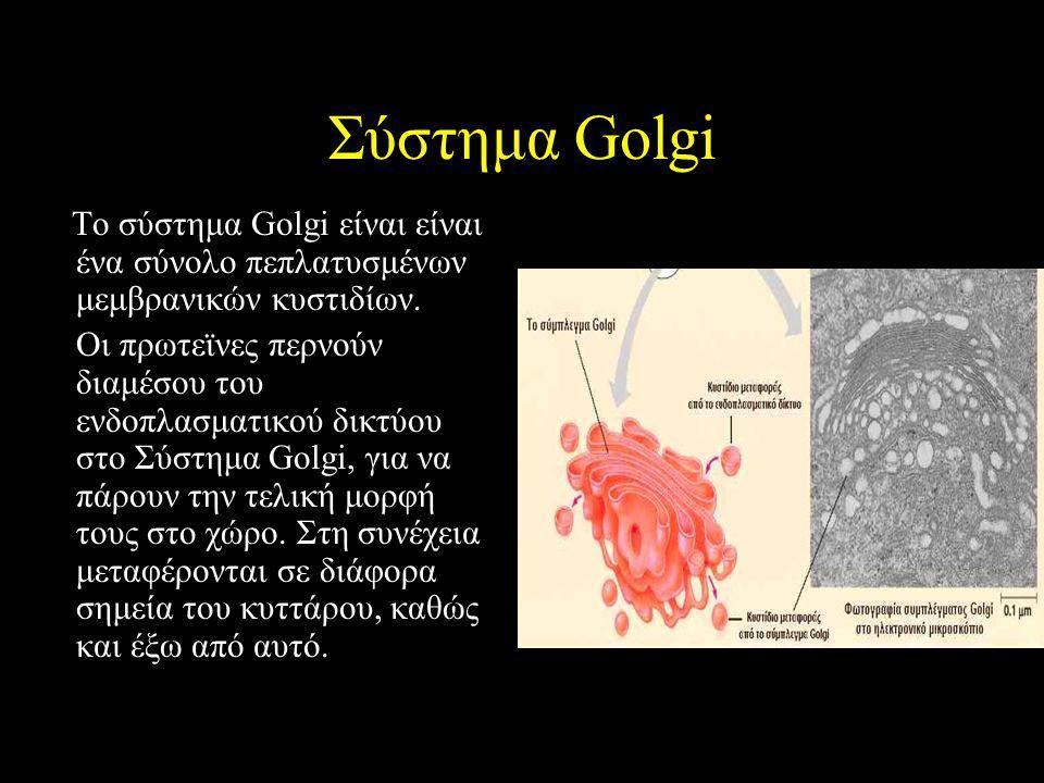 Σύστημα Golgi Το σύστημα Golgi είναι είναι ένα σύνολο πεπλατυσμένων μεμβρανικών κυστιδίων. Οι πρωτεϊνες περνούν διαμέσου του ενδοπλασματικού δικτύου σ