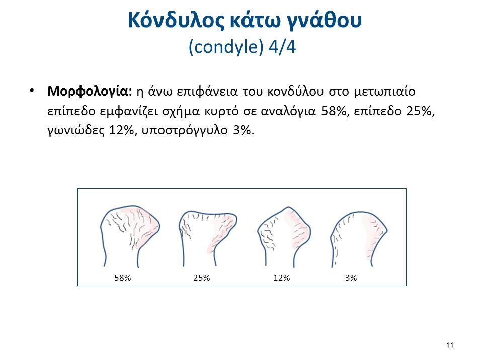 Κόνδυλος κάτω γνάθου (condyle) 4/4 Μορφολογία: η άνω επιφάνεια του κονδύλου στο μετωπιαίο επίπεδο εμφανίζει σχήμα κυρτό σε αναλόγια 58%, επίπεδο 25%,