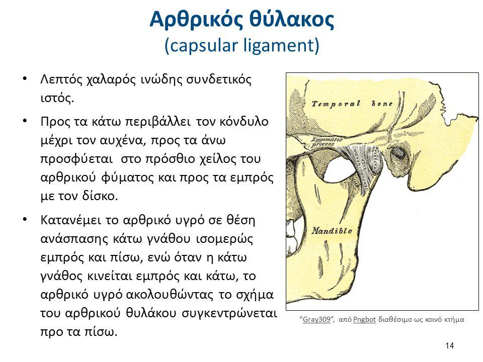 Αρθρικός θύλακος (capsular ligament) Λεπτός χαλαρός ινώδης συνδετικός ιστός. Προς τα κάτω περιβάλλει τον κόνδυλο μέχρι τον αυχένα, προς τα άνω προσφύε