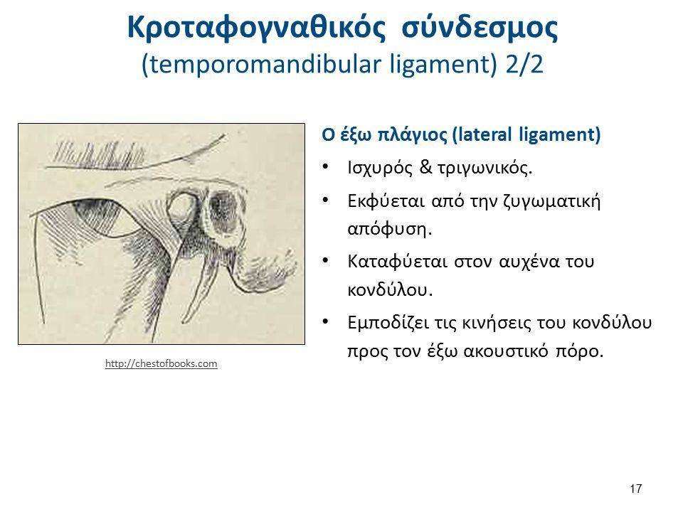 Κροταφογναθικός σύνδεσμος (temporomandibular ligament) 2/2 Ο έξω πλάγιος (lateral ligament) Ισχυρός & τριγωνικός. Εκφύεται από την ζυγωματική απόφυση.