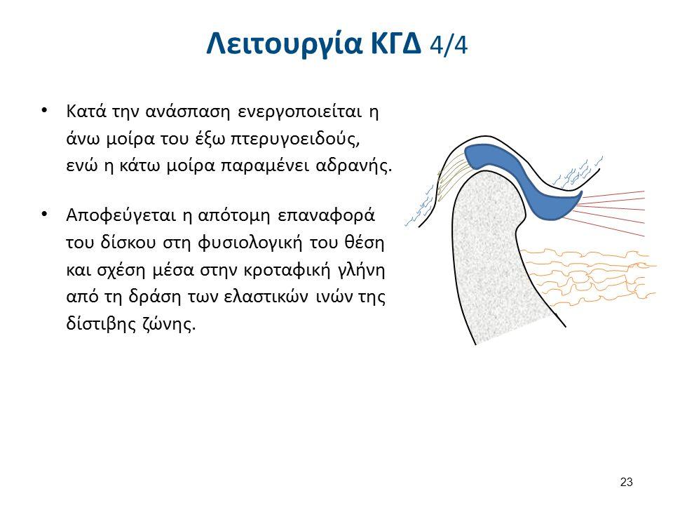 Λειτουργία ΚΓΔ 4/4 Κατά την ανάσπαση ενεργοποιείται η άνω μοίρα του έξω πτερυγοειδούς, ενώ η κάτω μοίρα παραμένει αδρανής. Αποφεύγεται η απότομη επανα