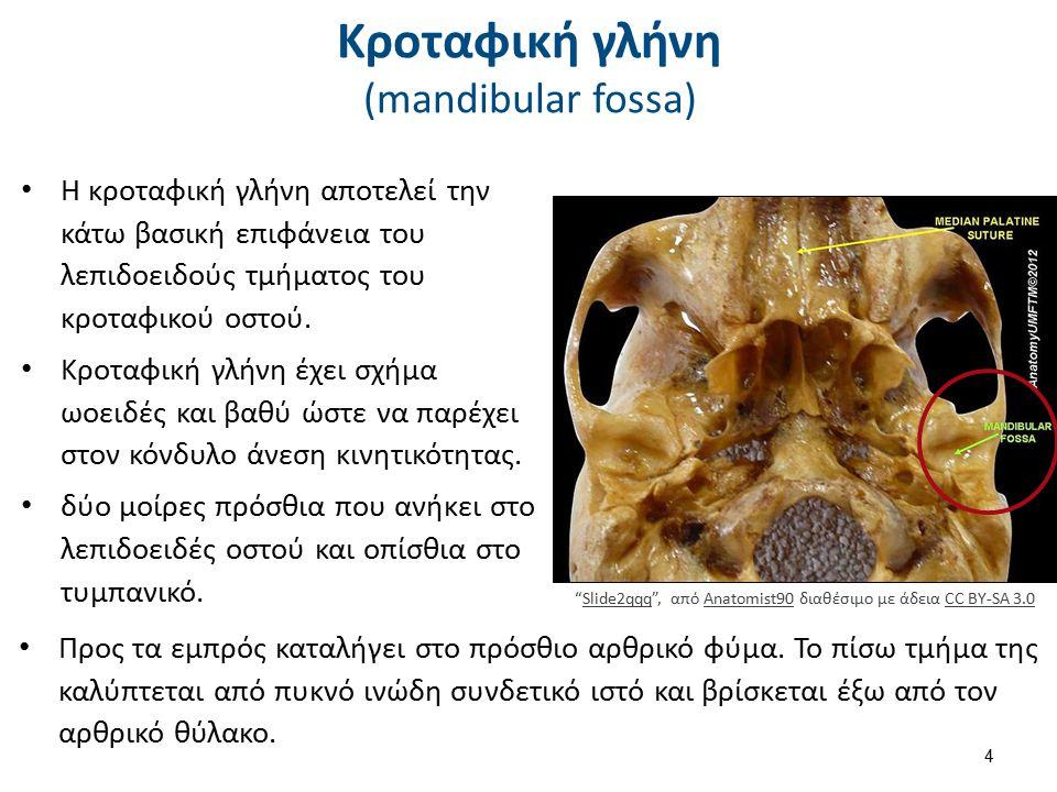 Κροταφική γλήνη (mandibular fossa) Η κροταφική γλήνη αποτελεί την κάτω βασική επιφάνεια του λεπιδοειδούς τμήματος του κροταφικού οστού. Κροταφική γλήν