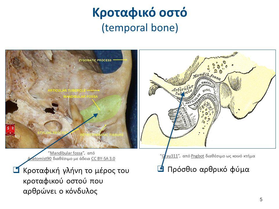 """ Κροταφική γλήνη το μέρος του κροταφικού οστού που αρθρώνει ο κόνδυλος  Πρόσθιο αρθρικό φύμα Κροταφικό οστό (temporal bone) """"Gray311"""", από Pngbot δι"""