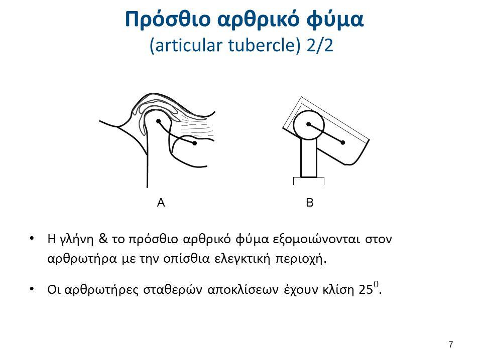 Πρόσθιο αρθρικό φύμα (articular tubercle) 2/2 Η γλήνη & το πρόσθιο αρθρικό φύμα εξομοιώνονται στον αρθρωτήρα με την οπίσθια ελεγκτική περιοχή. Οι αρθρ