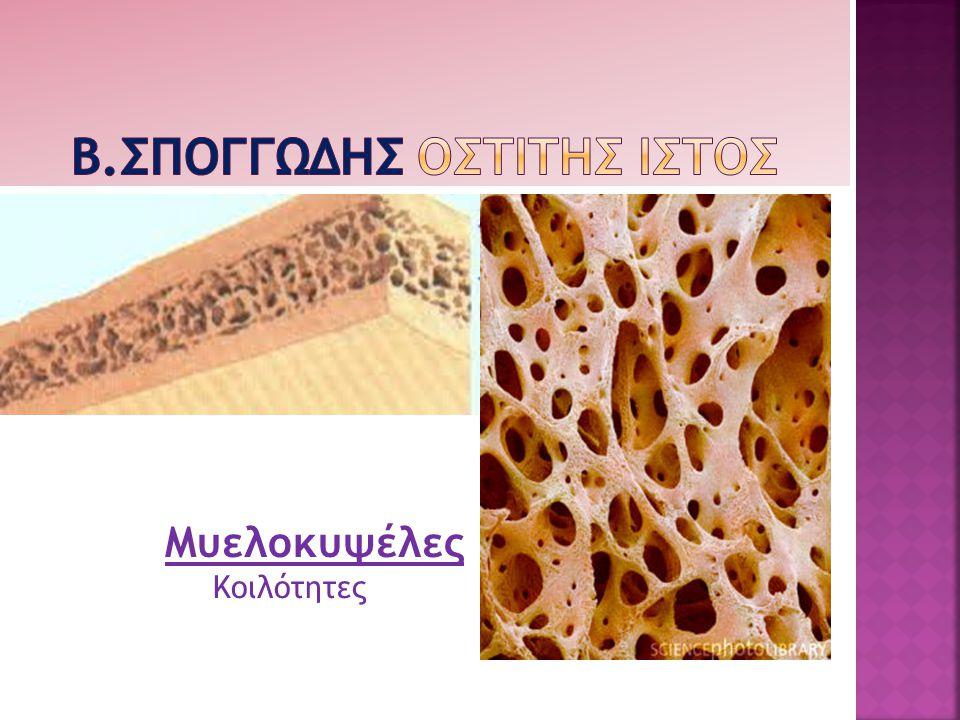 Μυελοκυψέλες Κοιλότητες