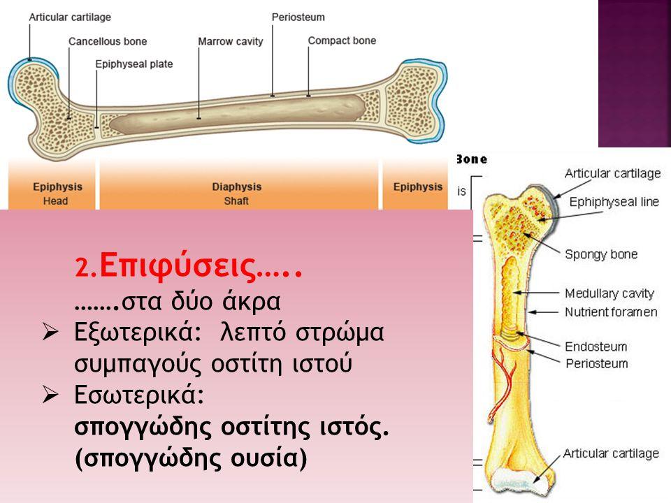  ο μαλακότερος ιστός παρεμβάλλεται μεταξύ των δύο οστών  δεν επιτρέπει σχεδόν καμία κινητικότητα