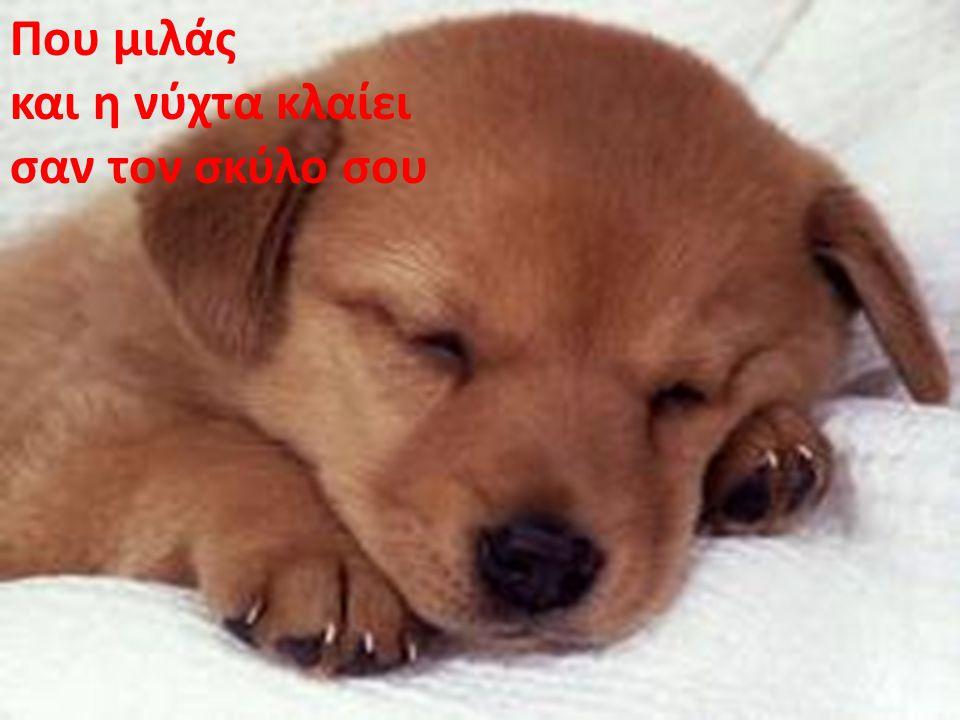 Που μιλάς και η νύχτα κλαίει σαν τον σκύλο σου
