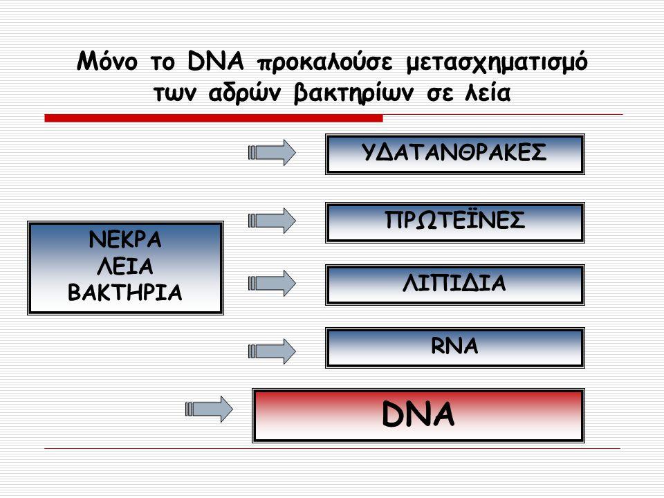 Μόνο το DNA προκαλούσε μετασχηματισμό των αδρών βακτηρίων σε λεία ΝΕΚΡΑ ΛΕΙΑ ΒΑΚΤΗΡΙΑ ΥΔΑΤΑΝΘΡΑΚΕΣ ΠΡΩΤΕΪΝΕΣ ΛΙΠΙΔΙΑ RNA DNA