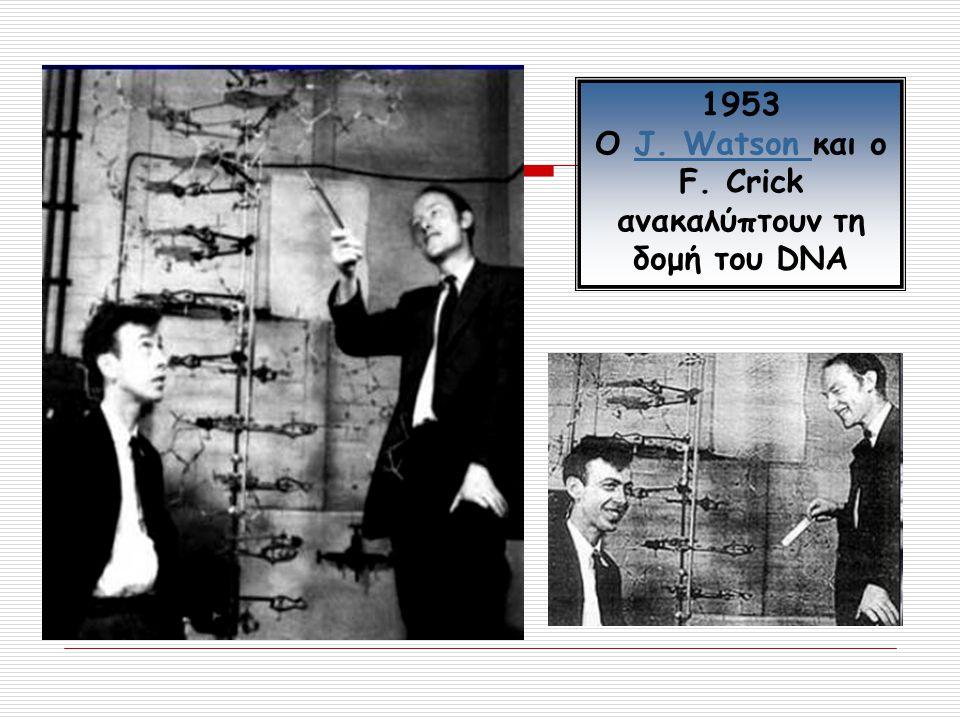 1953 Ο J. Watson και ο F. Crick ανακαλύπτουν τη δομή του DNAJ. Watson