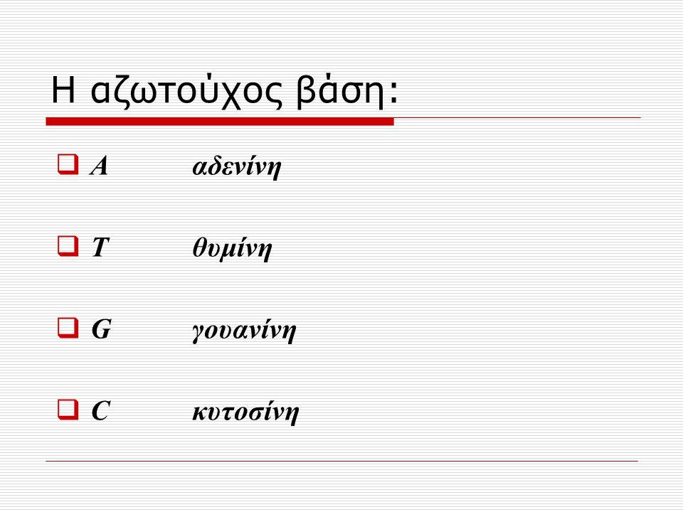 Η αζωτούχος βάση:  Α αδενίνη  Τ θυμίνη  Gγουανίνη  Cκυτοσίνη