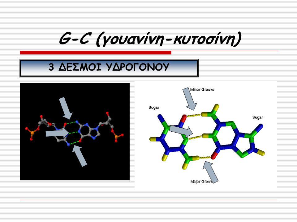 G-C (γουανίνη-κυτοσίνη) 3 ΔΕΣΜΟΙ ΥΔΡΟΓΟΝΟΥ