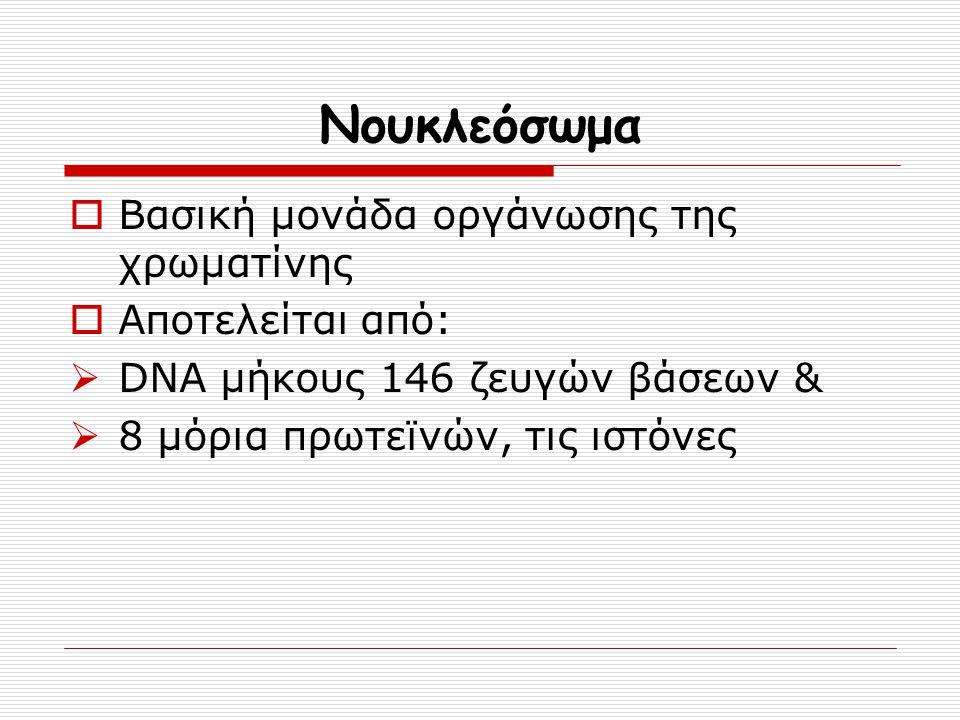 Νουκλεόσωμα  Βασική μονάδα οργάνωσης της χρωματίνης  Αποτελείται από:  DNA μήκους 146 ζευγών βάσεων &  8 μόρια πρωτεϊνών, τις ιστόνες