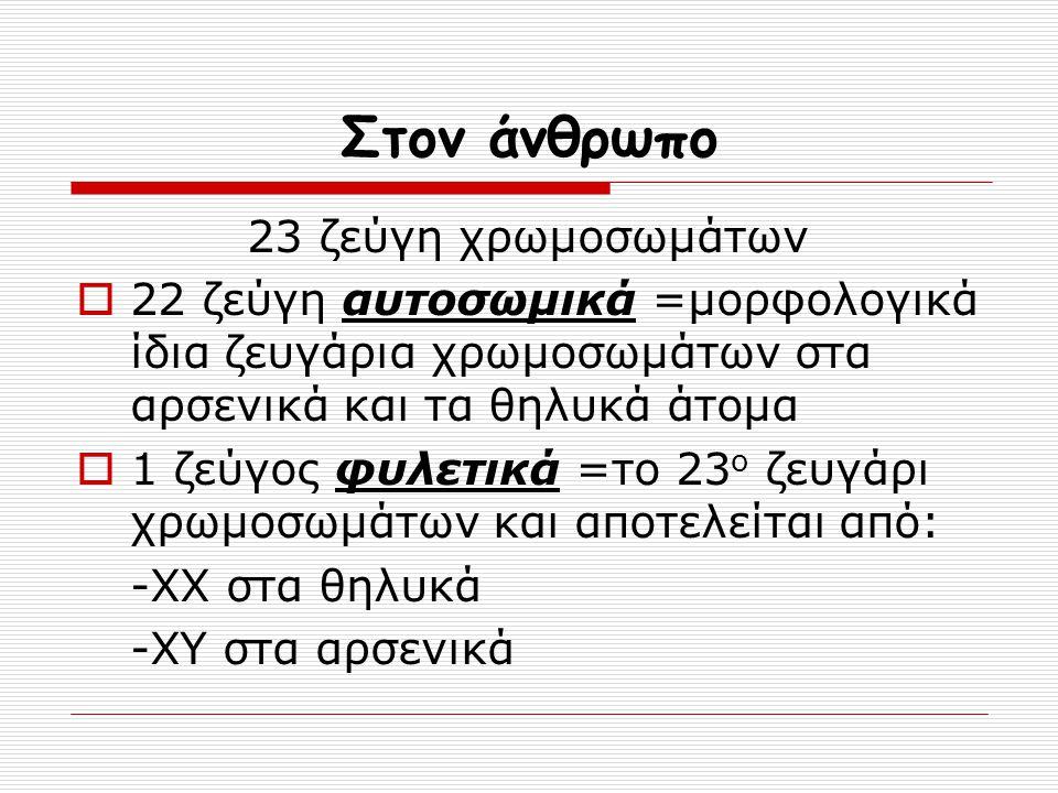 Στον άνθρωπο 23 ζεύγη χρωμοσωμάτων  22 ζεύγη αυτοσωμικά =μορφολογικά ίδια ζευγάρια χρωμοσωμάτων στα αρσενικά και τα θηλυκά άτομα  1 ζεύγος φυλετικά
