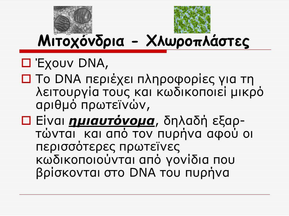 Μιτοχόνδρια - Χλωροπλάστες  Έχουν DNA,  Το DNA περιέχει πληροφορίες για τη λειτουργία τους και κωδικοποιεί μικρό αριθμό πρωτεϊνών,  Είναι ημιαυτόνο