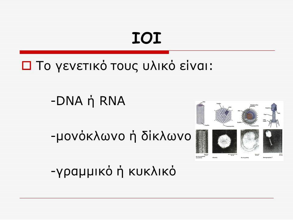 ΙΟΙ  Το γενετικό τους υλικό είναι: -DNA ή RNA -μονόκλωνο ή δίκλωνο -γραμμικό ή κυκλικό